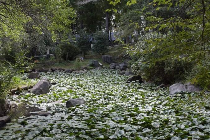 井伊谷宮池